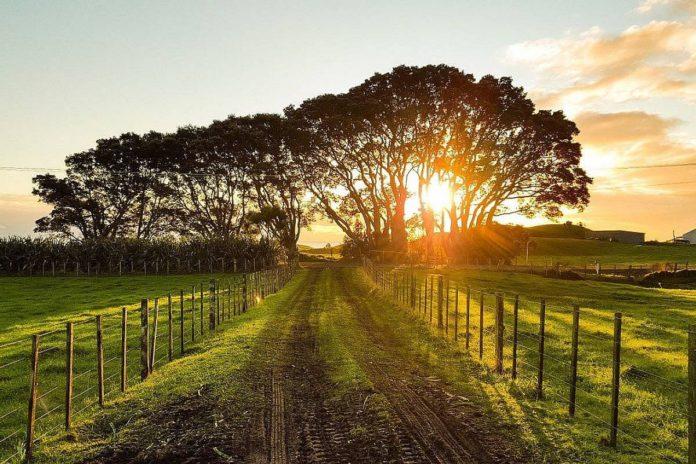 Ireland should follow NZ model on ag emissions – Fine Gael