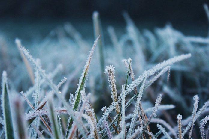 Grass frost, weather, weather forecast, Met Éireann