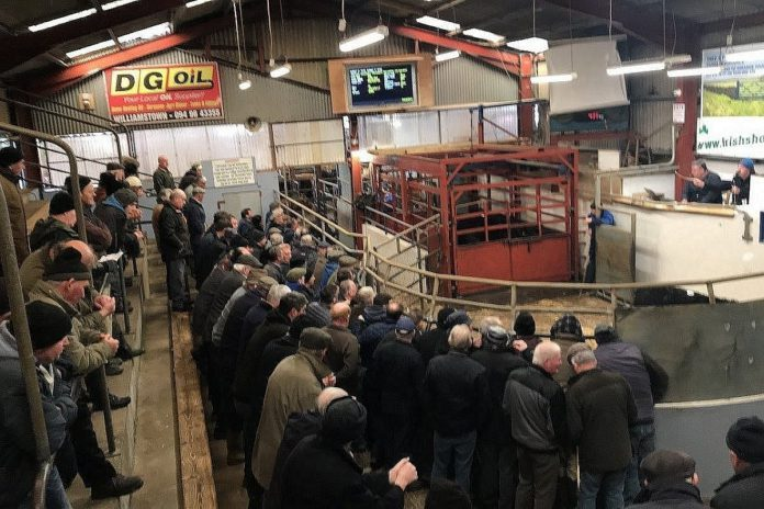 Strong demand for in-spec cattle at Castlerea