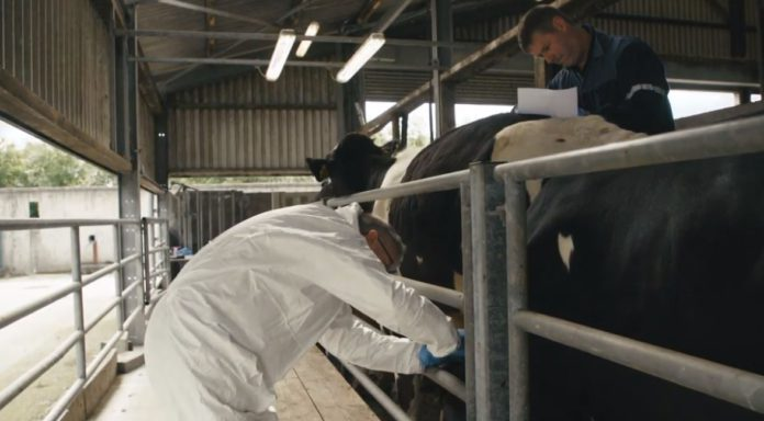 VIDEO: How do TB tests work and how effective are they?