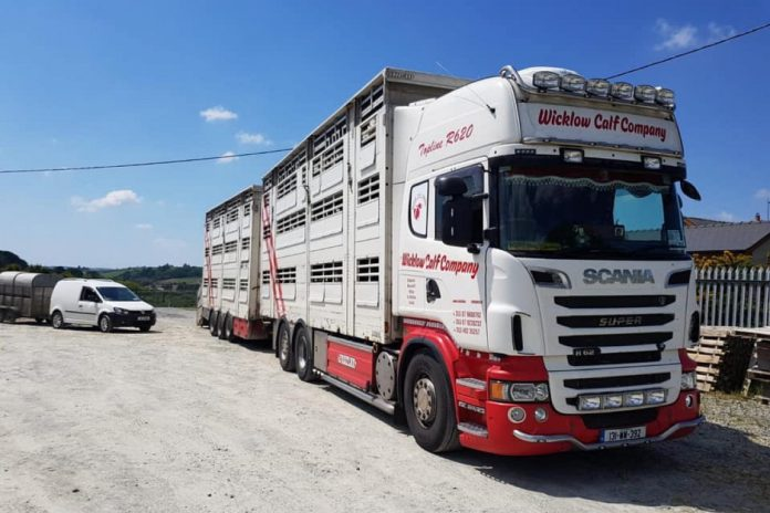 VIDEO: Bulls exported to Spain