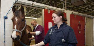 veterinary, veterinary medicine, agri careers