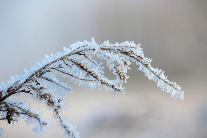 weather forecast this week, frost