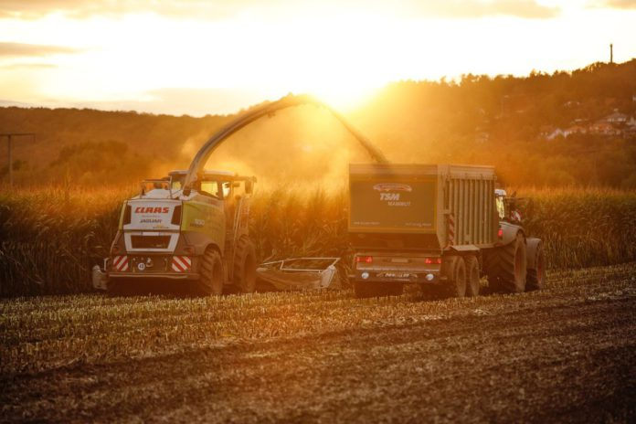 Harvester and tractor trailor at sunset