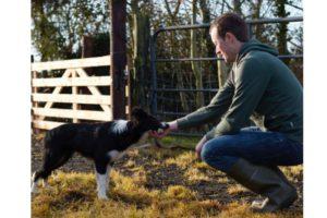 Edward Earle, sheep. sheep farmer, sheep farming, farming news, sheepdog, Farmer's Diary,