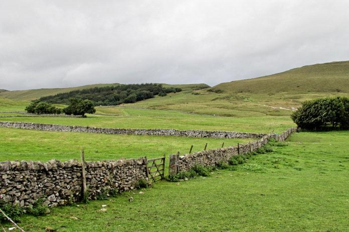 field, grassland management, grass, grazing, fertiliser plan