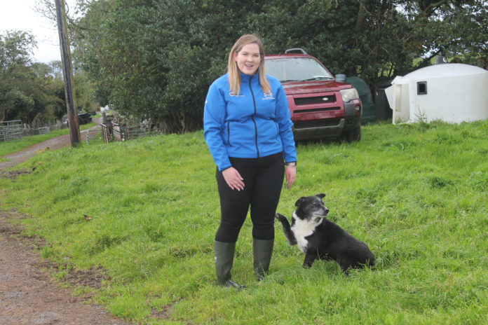 Anne Biggins - sheep yard at Ballinrobe Mart'