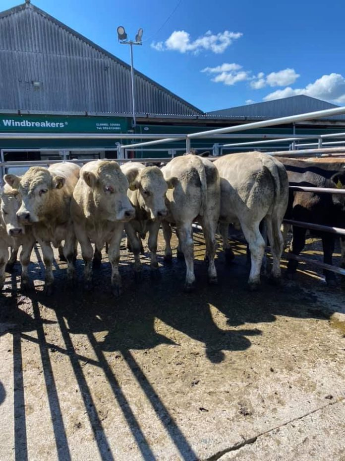 Cashel Mart - Mart report, mart prices, cattle prices, pen of cattle