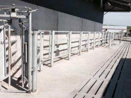 Cattle Crush - TB testing