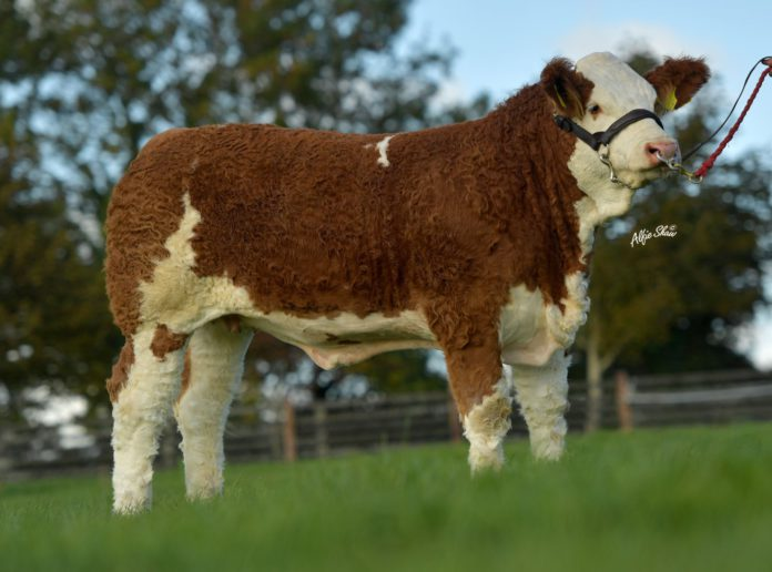 The renowned Rathnashan Simmental herd will hold its first online sale of elite females and young bulls next month.