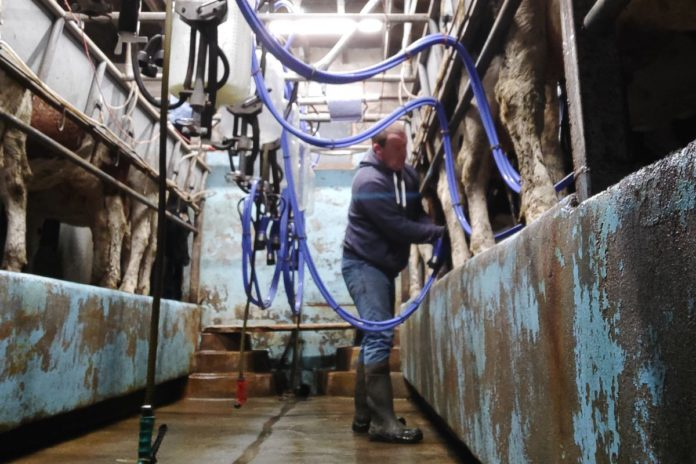 Crissawn Farm, Ballinagore, Co. Westmeath, owned by Martin Carey and his parents, William, and May, consists of 65 dairy cows.