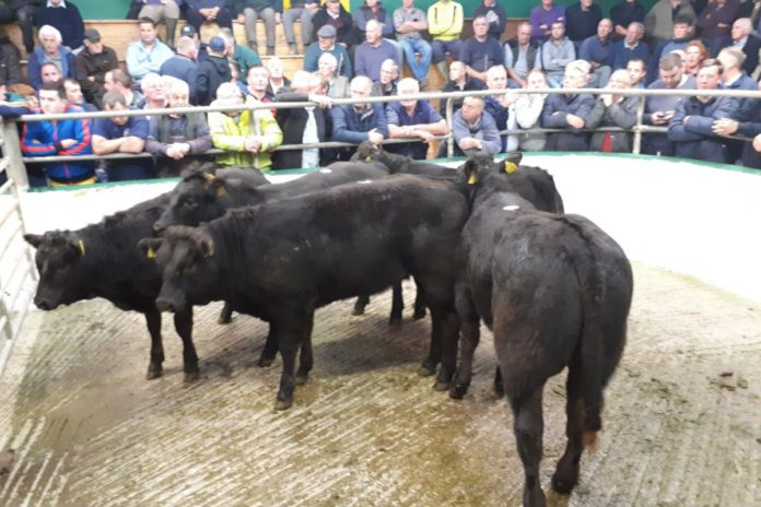 Mart Prices: Kilfenora Mart held a weanling sale on Monday, October 26th.
