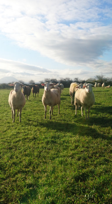 €295,000 for 25-acre certified organic sheep milk business in Ballybeg, Kincon, Co. Mayo.