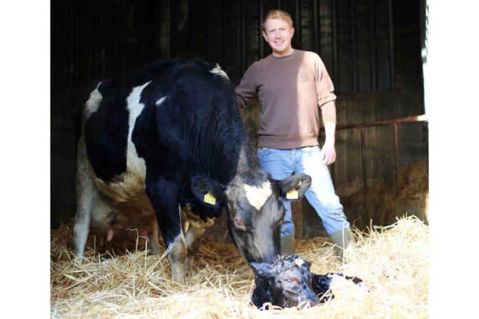 Kilsunny Pedigree Herds, cattle