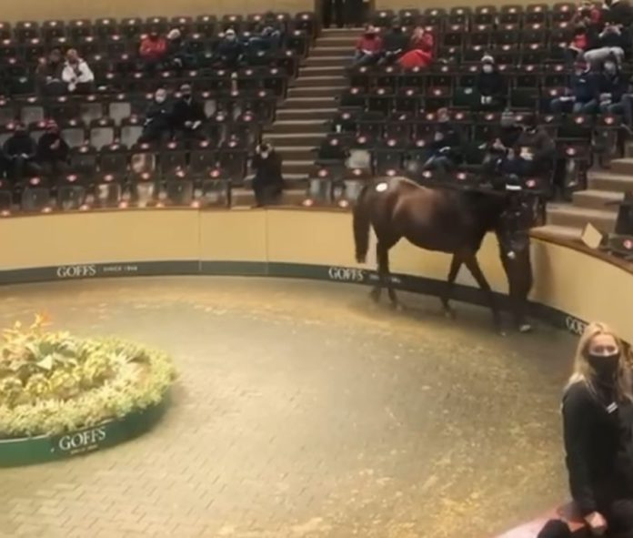 €530,000 Apple's Jade becomes 'most expensive National Hunt in history'