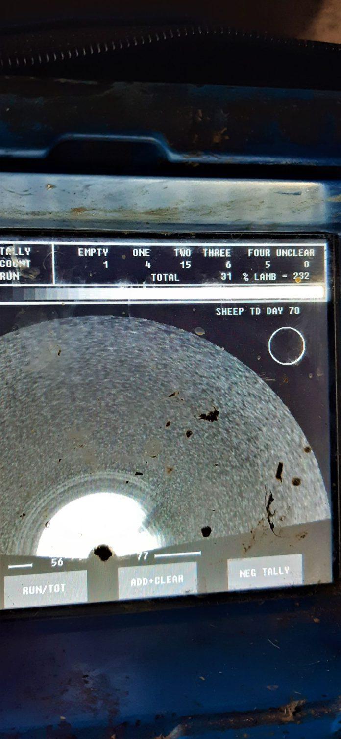 Sheep scanning results, sheep farming, sheep farmers