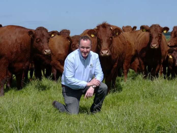Aidansfield Salers, Salers cattle, Conor Colgan, herd dispersal, suckler farming, farming news, agricultural news, That's Farming