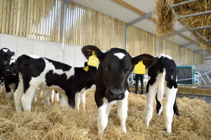 JFC, dairy, dairy farming, dairy farmers, JFC Agri Calf Crib