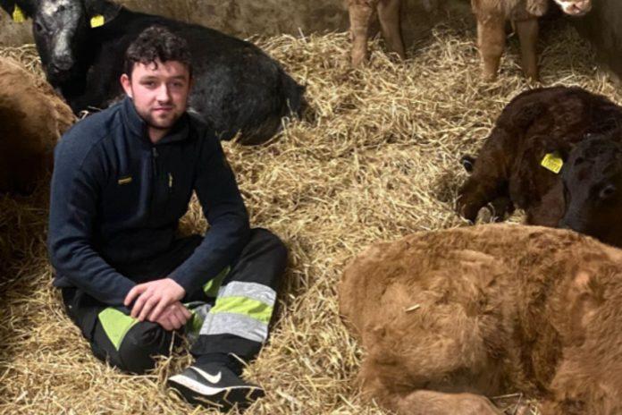 suckler farming, young farmer, cows, livestock, farming news, livestock shed, farming in Ireland