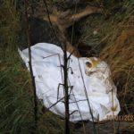 dog dumped, dogs, ditch, German shepherd dog