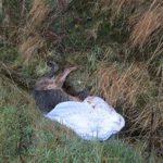 ditch, field, farming news, dog dumped