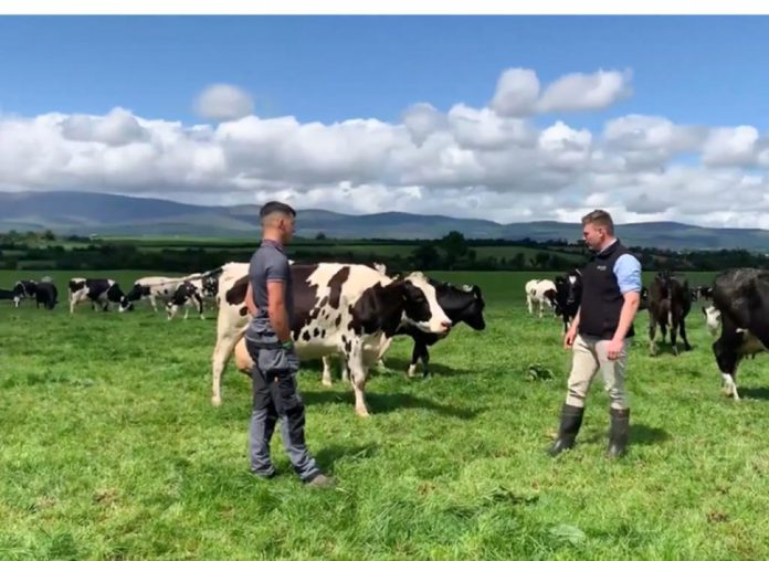 Liam Barton, dairy, dairy cows, Grasstec