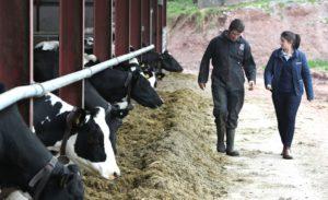 Aislínn Campbell, dairy farm, dairy farmer, Alltech