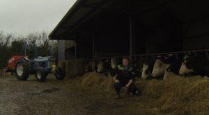 Alisha McCarthy, cattle, farming,