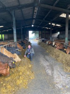 Livestock shed, cattle, beef cattle, suckler farming, sucklers,