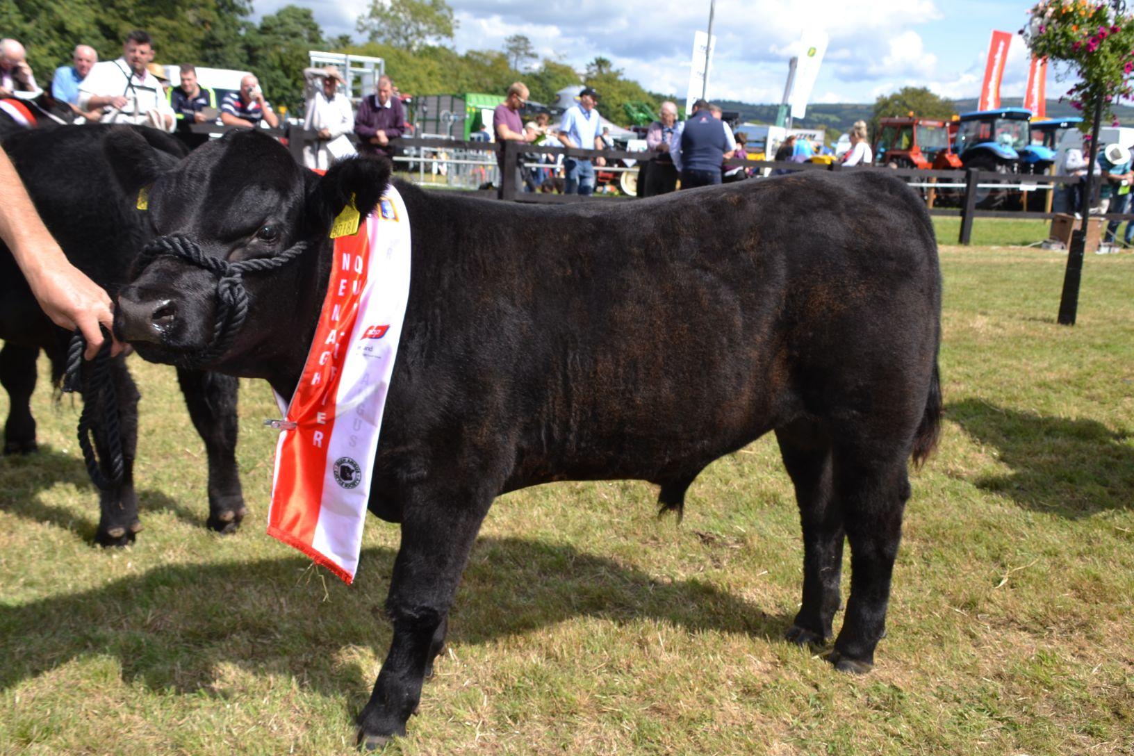 Towra Herds, Angus, cattle, farming news