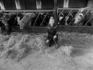 Megan Foley, silage, dairy farming, shed, livestock
