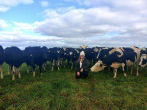 Dairy cows, Nicole Keohane, WIT graduate, AHV International