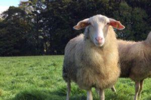 Ballyhubbock Farm, farming news, sheep milk's ice-cream