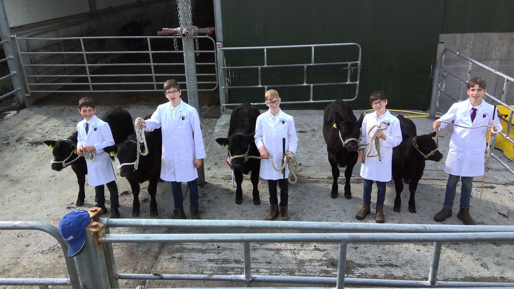 Angus cattle, farming,