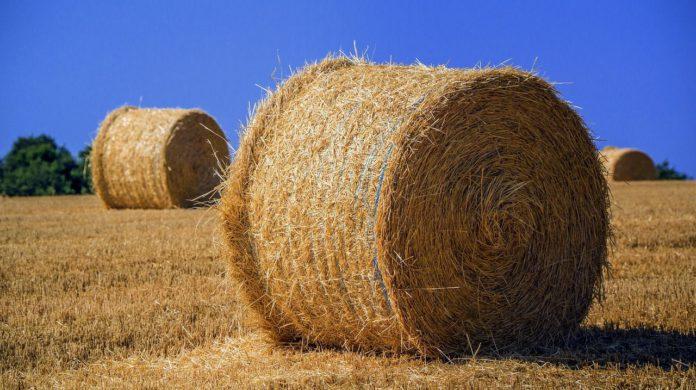 Straw, animal bedding, animal feeding, animals, cattle