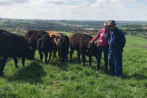 farm, farmer, farming, beef farming, dairy farming, showing cattle