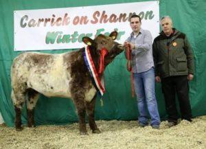 Kieran Flatley, Shorthorn, cattle, Winter Fair,