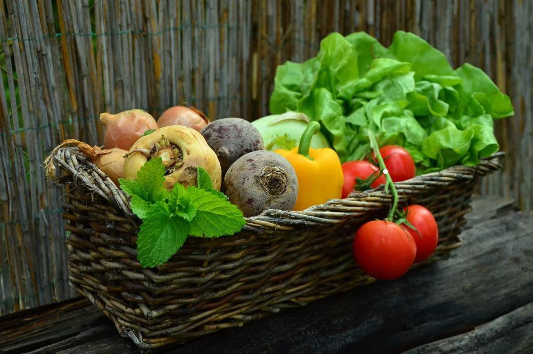 Vegetables, how to start a small veg garden in Ireland
