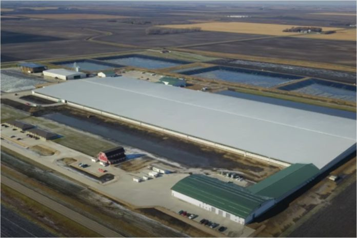 Large dairy farm, dairy, dairy farmer, dairy farming