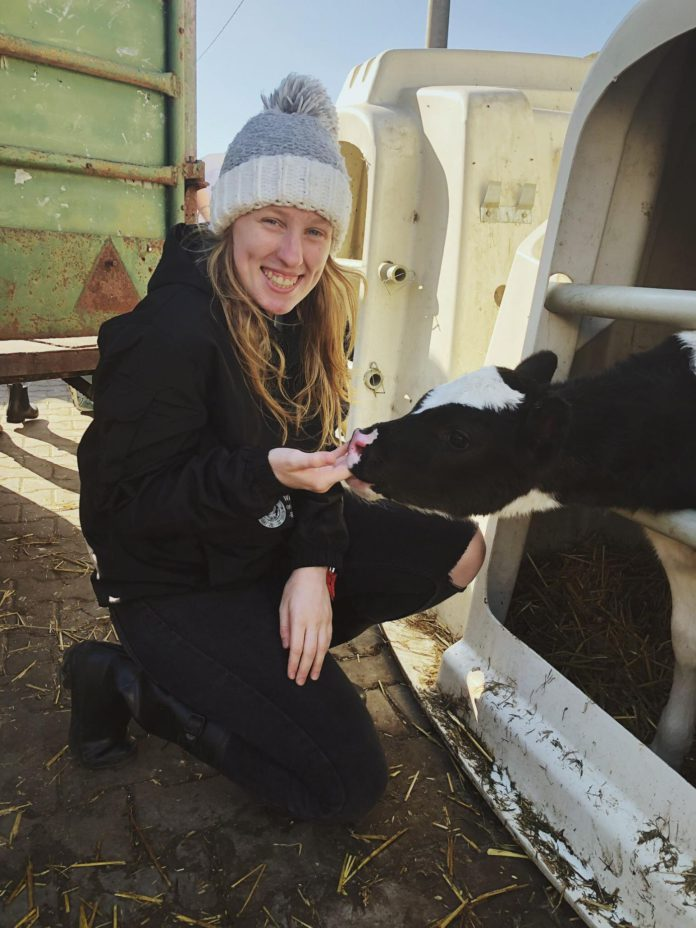 Lauren Heuston, dairy farming, dairy farmers, student focus, studying veterinary medicine in Warsaw