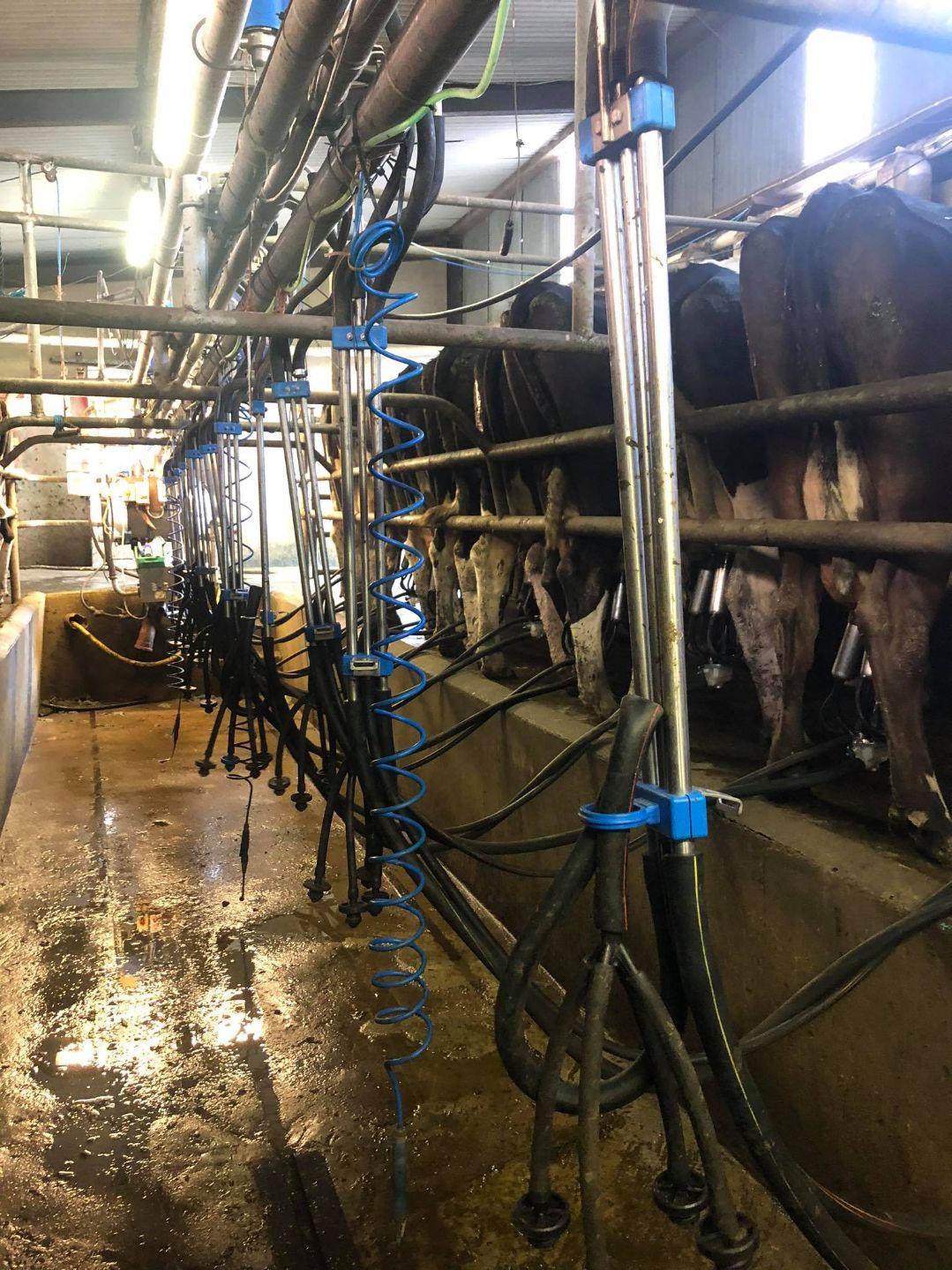 dairy, dairy farmer, dairy farming, dairy parlour, farming, student placement,