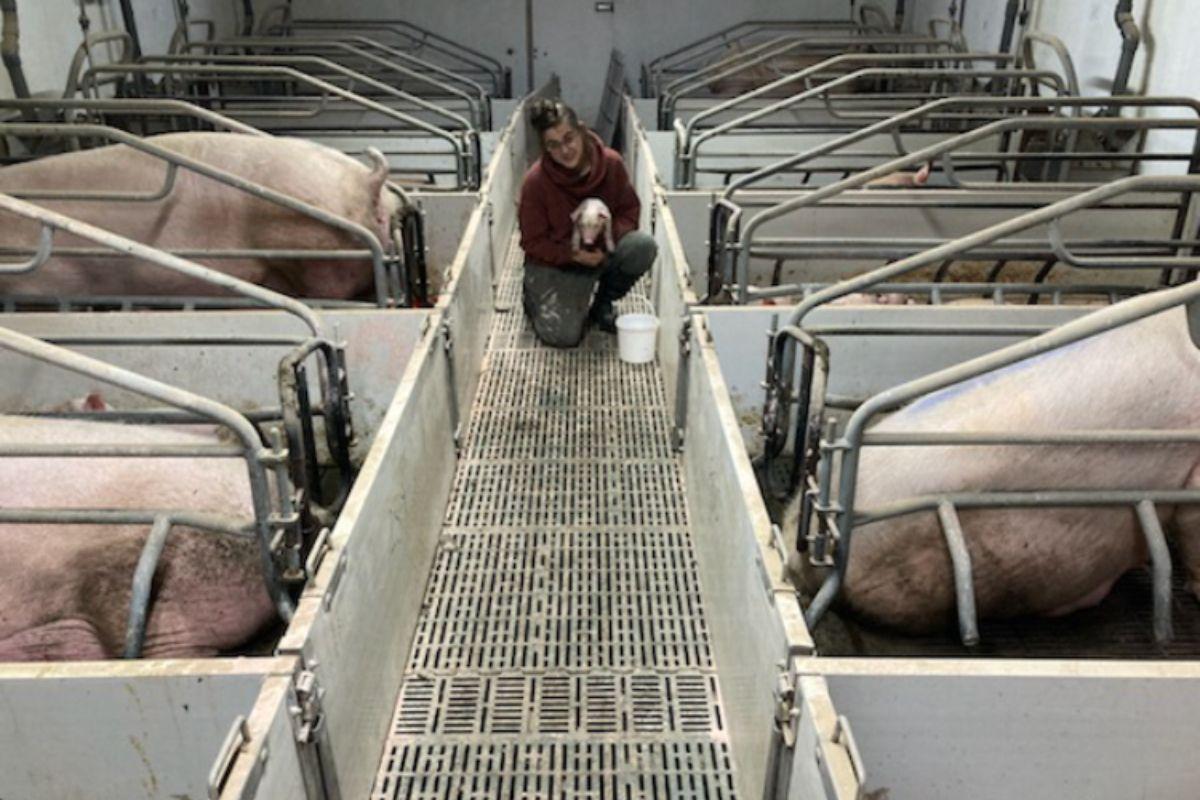 Amy Barry, pig farming, pig farmer, farming life, piggery