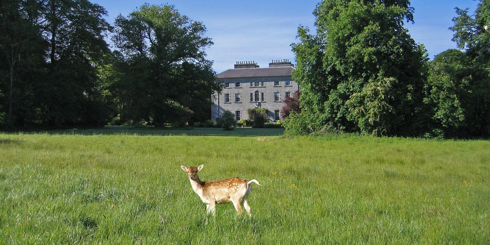 Coopershill Estate, deer, deer farming in Ireland