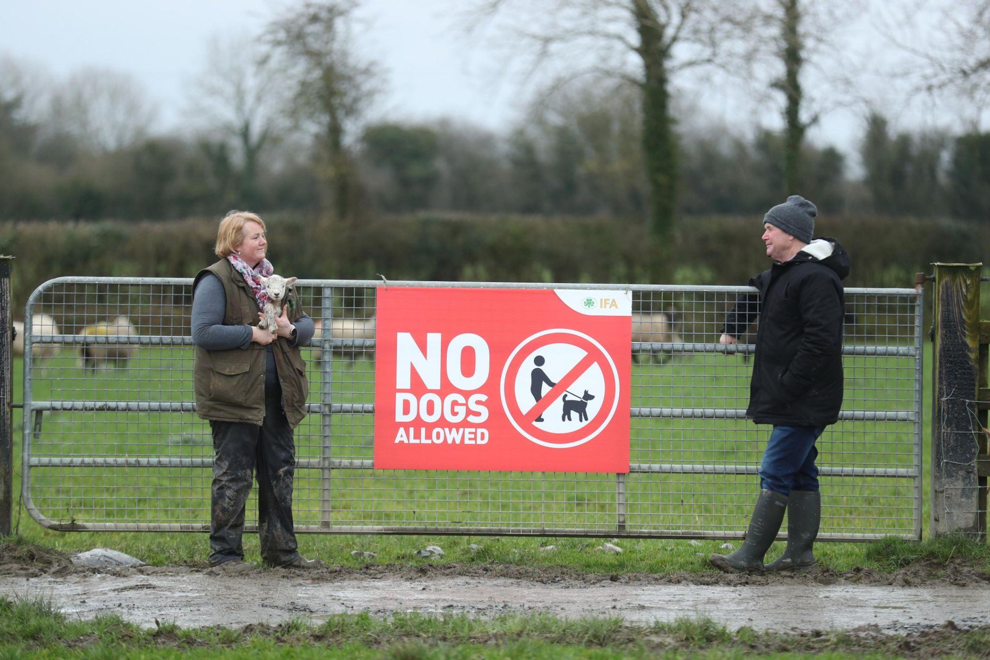 Farmers banning dogs, sheep, sheep farming, sheep farmers, dog attacks,