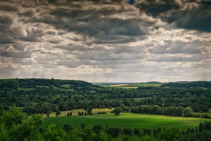 farm hedgerow, biodiversity, farming, hedgerows,