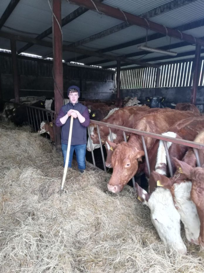 Aidam Moran, Kilmac Charolais, pedigree cattle breeders in Ireland