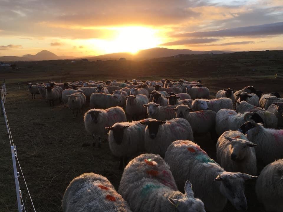Sheep, sheep farming, sheep farmers, farming with nature