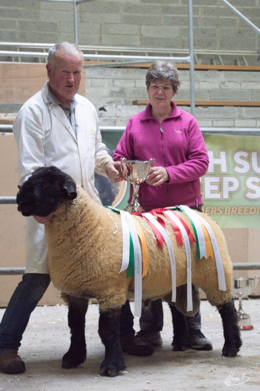 Isheep farmers in Ireland, rish Suffolk Sheep Society, sheep farming, sheep breeders