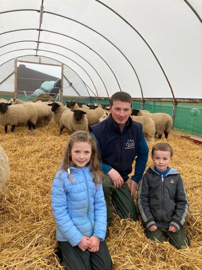 polytunnel for livestock, Sheep, Texels, livestock accommodation,