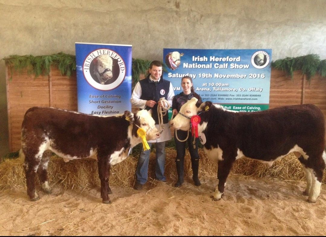 Hugh P Murray, Hereford cattle in Ireland, beef, beef prices, beef farming